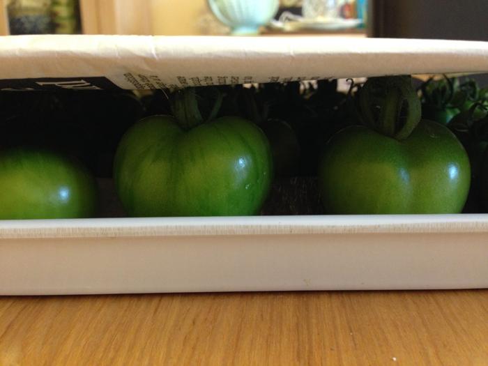 Green Tomatoes 2